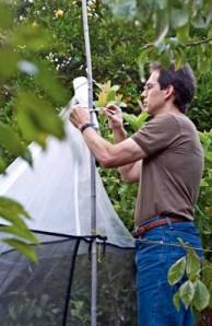 entomology curator