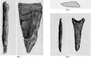 Tillman County fossils