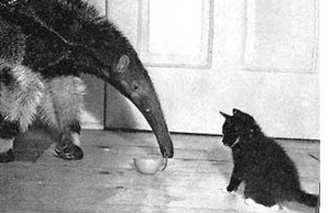 anteater and cat