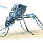 Namib beetle
